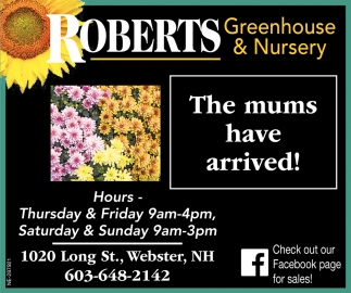 The Mums Have Arrived!